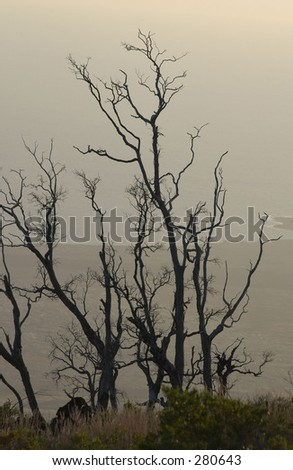 """View of dead trees near a volcano, Volcano National Park, Hawaii, (Keith Levit)"""