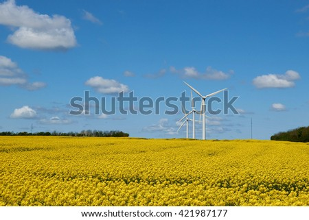 view over a yellow field under blue sky and clouds