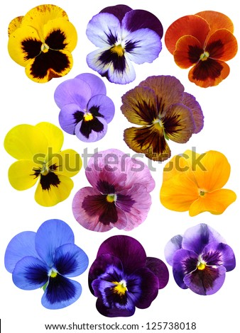 violet  flower collection - stock photo