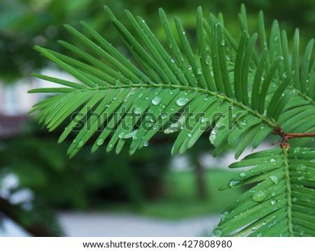 water drop ilustrtation rain nature rural background bubble shiny dew purity color fresh green  - stock photo