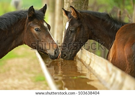 watering for animals - stock photo