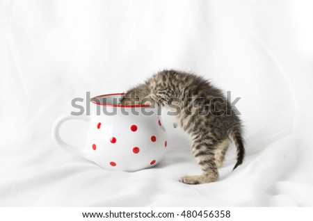 4 weeks old kitten looking for milk in a mug