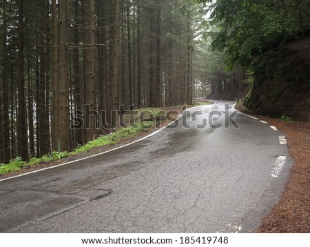 wet Road asphalt road through forest wet after rainfall