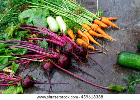 Wet vegetables on a dark surface. Wet beets, carrots and zucchini on dark surface, top view. Harvesting
