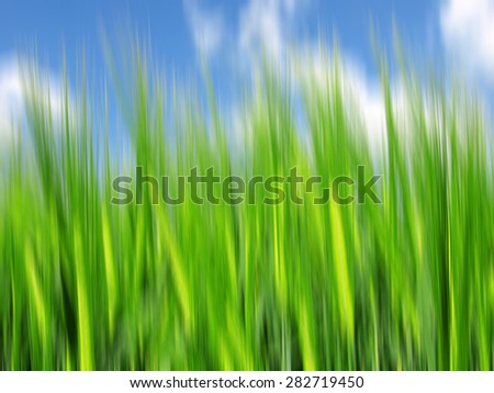 wheat field. Abstract blurred nature background. - stock photo