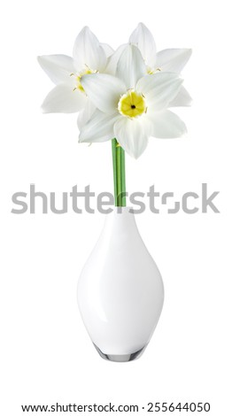 White and yellow color daffodil in vase isolated on white background - stock photo