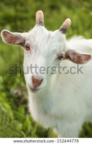 White kid - stock photo