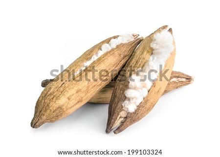 White silk cotton - stock photo
