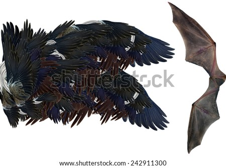 wings of the bird isolated on white - stock photo