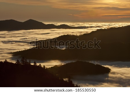 Winter atmosphere in montain with cloudy fir tree forest, Vosges, France - stock photo
