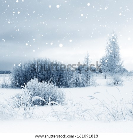 Winter landscape, scenery with trees in sunny cold day  - stock photo