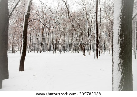winter landscape with snow-covered trees   - stock photo