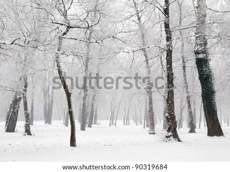 Winter scene at the park - stock photo