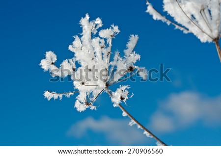 Winter scene Frozenned flower close up