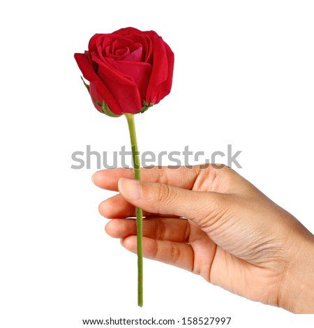 woman hand holding a red rose isolated on white background