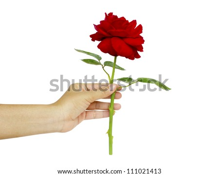 woman hand with red manicure holding red rose isolated on white background