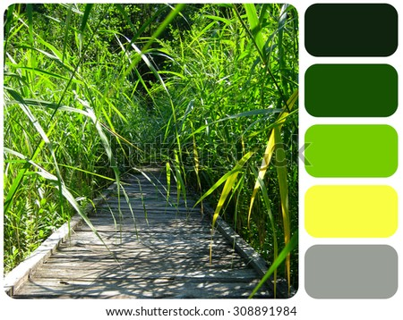 wooden road in the sunny summer forest grass, background colour palette with color swatch - stock photo