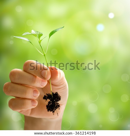 wooman holding a plant between hands on a spring backgrounds - stock photo