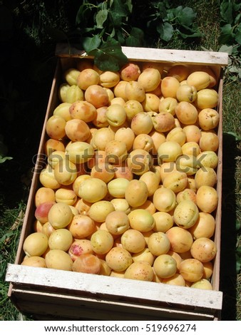 "World""s best apricots from Armenia"