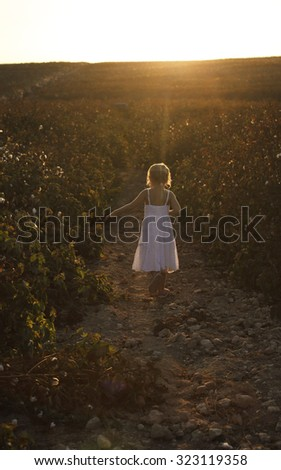 5 years old girl standing in the cotton field - stock photo