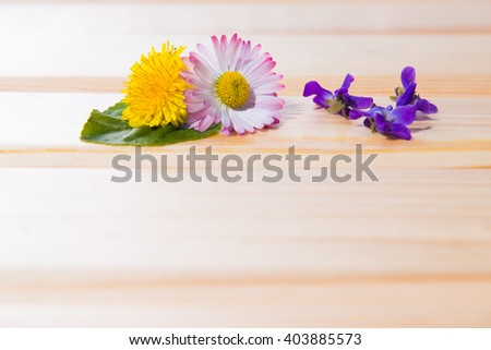 yellow dandelion in the Wooden background. Background with fresh flowers on wooden planks. Selective focus. Place for text.