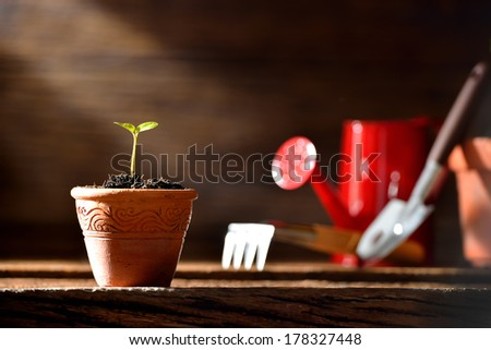Young plant and gardening tools on old wooden background. - stock photo