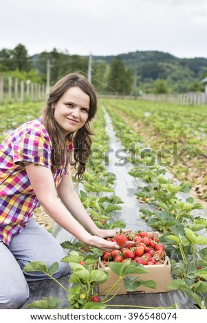 Young woman farmer next to a cardboard box full with fresh red strawberries on the field - stock photo