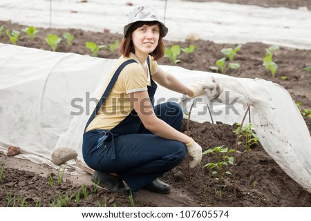 young woman looks sprouts of peppers in hotbed