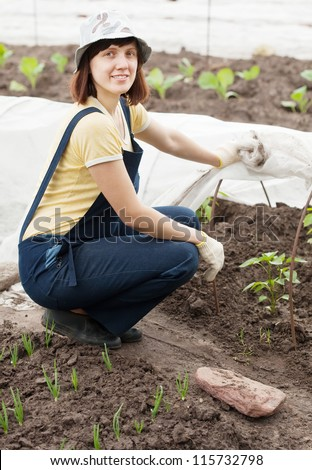 young woman looks sprouts of peppers in hotbed - stock photo