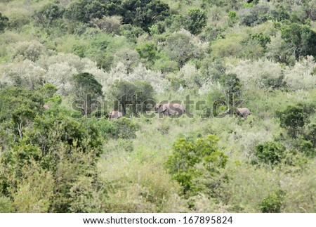 A African elephant in its habitat - stock photo