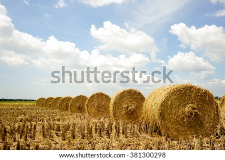 A afternoon scenery with rolls of haystack in paddy fields