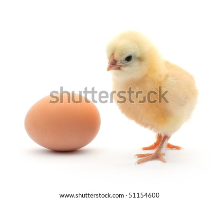 A baby chick sits next to a brown egg on white background