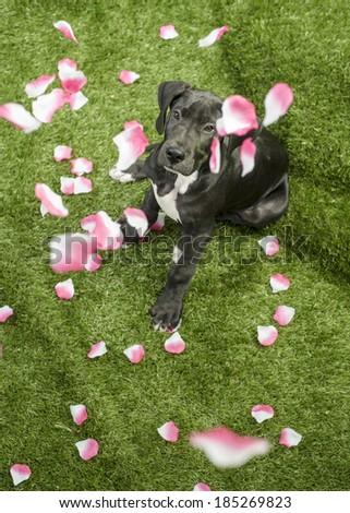 Tom Feist S Portfolio On Shutterstock