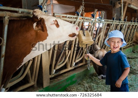 a baby laughs happy while a cow licks the salt offered by the baby