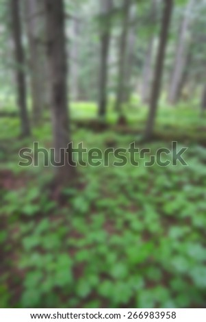 A background blur image of a forest with lots of green plants and old trees - stock photo