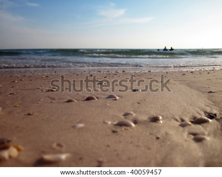 a background image of beach with sea shell