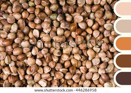 A background of dried hemp seeds in a colour palette with complimentary colour swatches - stock photo