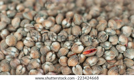 A background of fresh cockles for sale at a market - stock photo