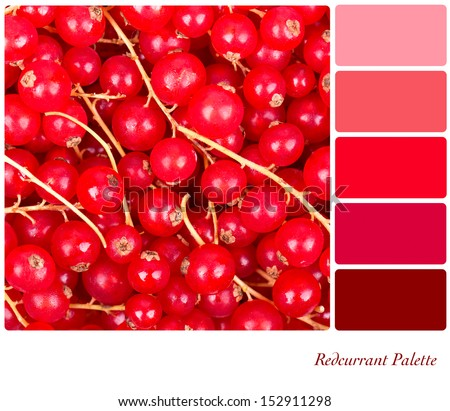 A background of fresh redcurrants in a colour palette with complimentary colour swatches - stock photo