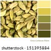 A background of green cardamom pods in a colour palette with complimentary colour swatches - stock photo