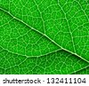 A background of green leaf - stock photo
