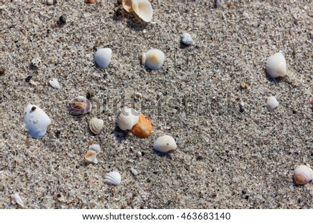 A background of small tropical sea shells and sand on a beach in Panama.