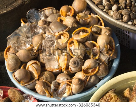 A background of snails for sale at a market - stock photo