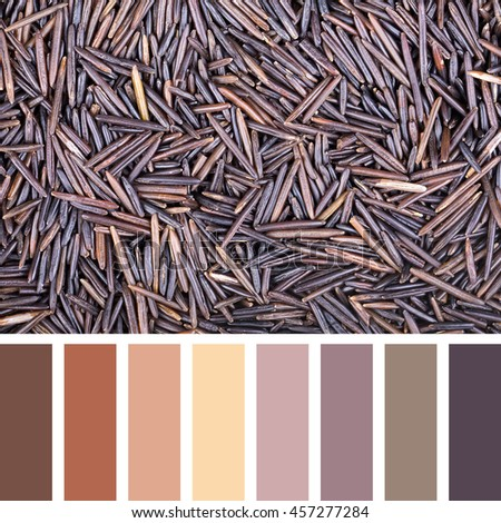 A background of wild rice In a colour palette with complimentary colour swatches. - stock photo