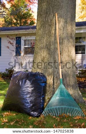 A bag full of leaves and a leaf rake near a large oak tree - stock photo