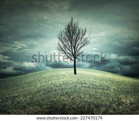 A bald tree in an autumnal landscape - stock photo