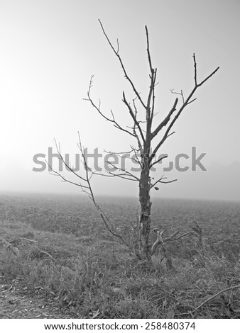 A bald tree in the fall time.  - stock photo