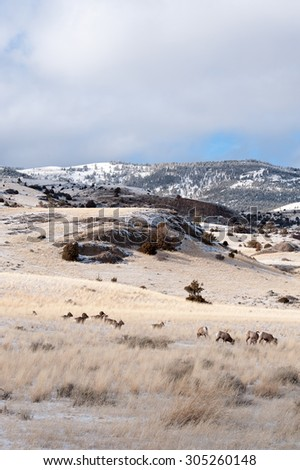 A band of big horn sheep set against the mountains with blue sky and clouds; portrait layout - stock photo