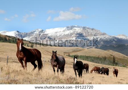 A band of horses near Glacier National Park - stock photo
