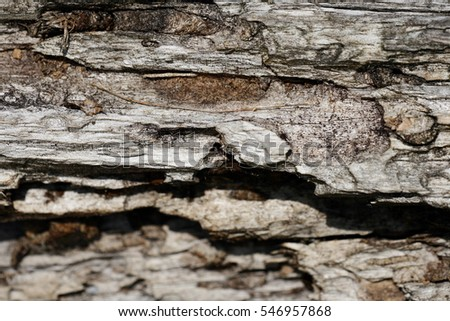 A bark/ wooden background. small d. o. f.
